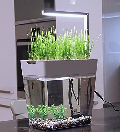 Acuario de Juego completo incluye lámpara LED - Aqua Garden - selbstreinigendes Acuario con mini de jardín - Innovador & Dekoratives Ecosistema para ...