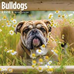 2020 Bulldogs Wall Calendar by Bright Day, 16 Month 12 x 12 Inch, Cute Dogs Puppy Animals English British 10