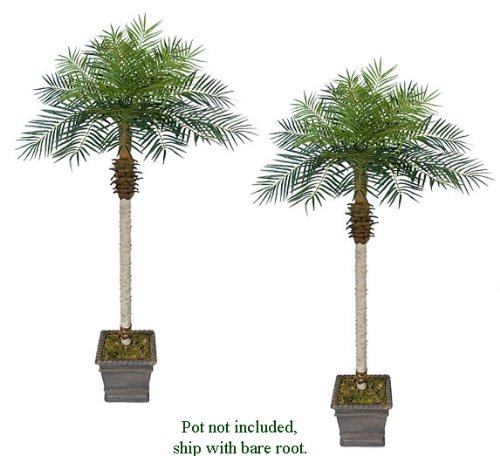 TWO 7' Date Phoenix Artificial Tropical Palm Trees, with No Pot, by Arcadia Silk Plantation