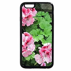 iPhone 6S / iPhone 6 Case (Black) Flowers mid-summer 87