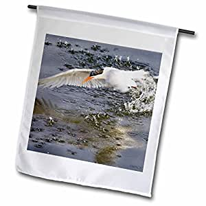 VWPics Animals - Elegant Tern emerges from a dive underwater with a spray of water.Bolsa Chica Wetlands,California - 18 x 27 inch Garden Flag (fl_45599_2)