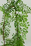 Richland Maidenhair Fern Garland 6'