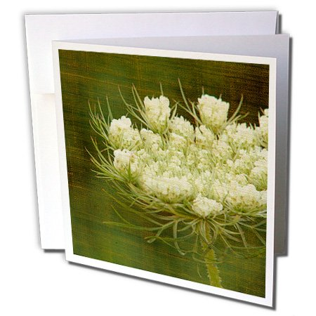 3dRose Queen Annes Lace by Angelandspot - Greeting Cards, 6 x 6 inches, set of 6 (gc_10931_1)
