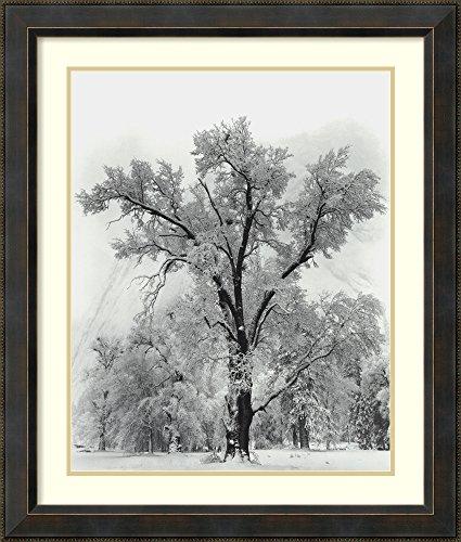 (Framed Wall Art Print | Home Wall Decor Art Prints | Oak Tree, Snowstorm, Yosemite National Park-1948 by Ansel Adams | Traditional Decor)