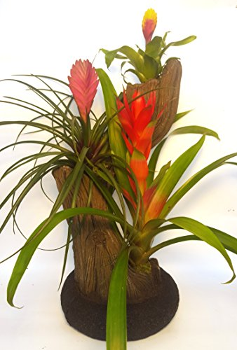 Air Flora 22'' Plant Fancy Planter, Small, Mix Colors by Air Flora