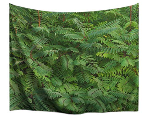 A.Monamour Tropical Green Plants Leaves Forest Garden Scenery Summer Theme Picture Print Fabric Tapestry Wall Hanging Decoration for Kids Bedroom 153x203cm/60 x80 -