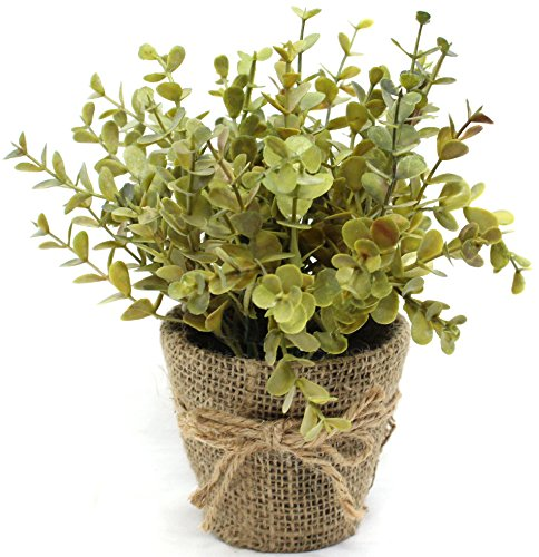 519NoVhrDNL - 8 Inch Artificial Eucalyptus Plant in Burlap Pot With Tie Indoor Home Decor Artificial Plant Faux