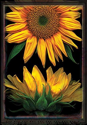 Toland Home Garden Sunflowers on Black 12.5 x 18 Inch Decora