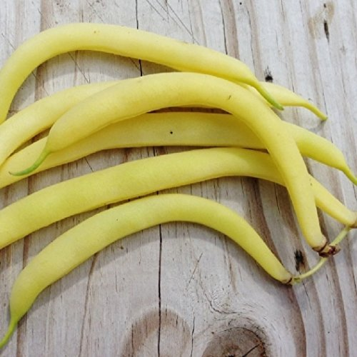 David's Garden Seeds Bean Bush Topnotch Wax U135T (Yellow) 100 Heirloom (Easy 7 Layer Dip Recipe)