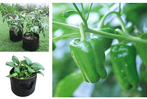50 gallon planter pots - 4
