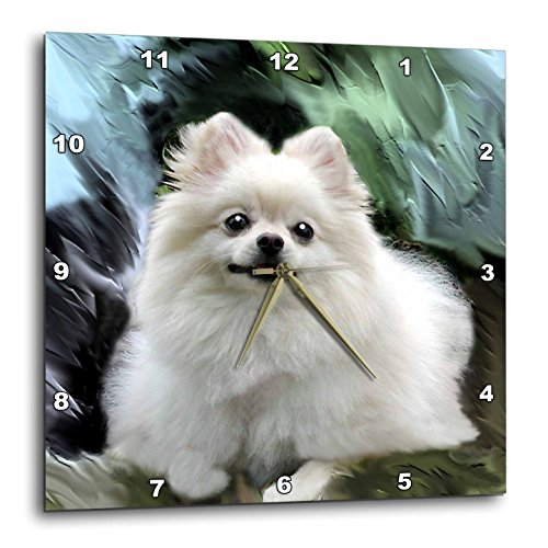 3dRose LLC Pomeranian Wall Clock, 10 by 10-Inch ()