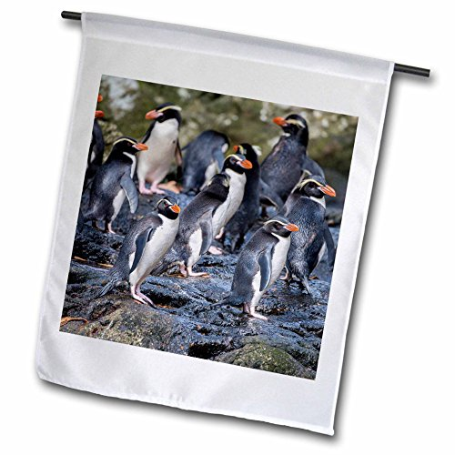 3dRose Danita Delimont - Penguins - New Zealand, Snares Islands, The Snares. Snares crested penguin. - 12 x 18 inch Garden Flag (fl_277141_1)