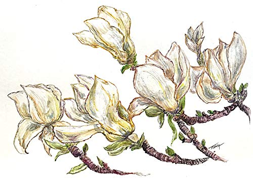 (Magnolia Series #1, Original Watercolor Painting)