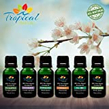 Big 6 Pack Organic Aromatherapy Essential Oil Kit with All-Time Favorite 15ml Selections. Undiluted Premium Therapeutic Grade Bulgarian Lavender, Peppermint, Spearmint, Tea Tree, Orange & Eucalyptus