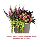 Burpee Combo 'Paradise' - Create Instant Colorful Container Gardens with Twelve 4 in. pots