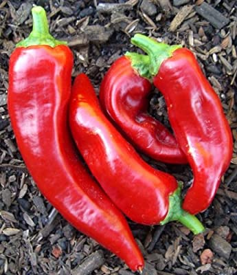 75+ Marconi Red Pepper Seeds- Imported Italian Heirloom