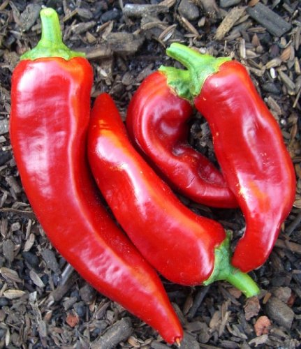 75+ Marconi Red Pepper Seeds- Imported Italian Heirloom (Long Italian Pepper Seeds compare prices)