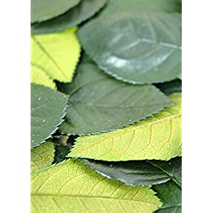 Preserved Rose Leaves - Excellent Home Decor - Outdoor Indoor 13