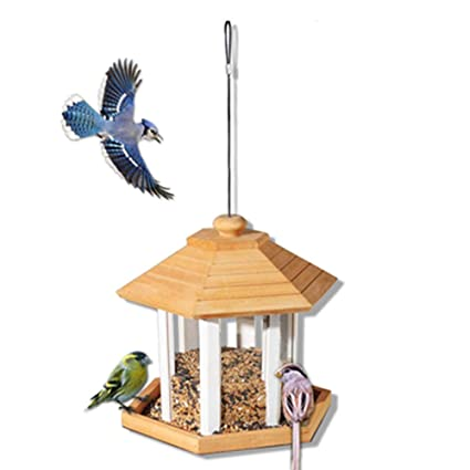 Amazon.com : Wild Bird Feeder Bird Feeder For Outdoors ... on wood bird house plans free, cardinal bird house plans free, thrush bird house plans free, dove bird house plans free, woodpecker bird house plans free, owl bird house plans free, oriole bird house plans free,