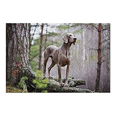 Weimaraner Dog in Forest 9011314 (Premium 500 Piece Jigsaw Puzzle for Adults, 13x19, Made in USA!): Toys & Games