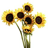 GlobalRose 15 Stems of Sunflowers Brown Center - Fresh Flowers for Delivery