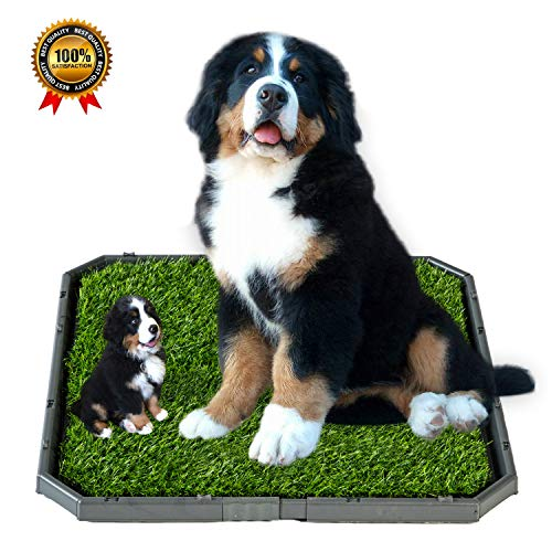 HUILE Puppy Training Holder Grass