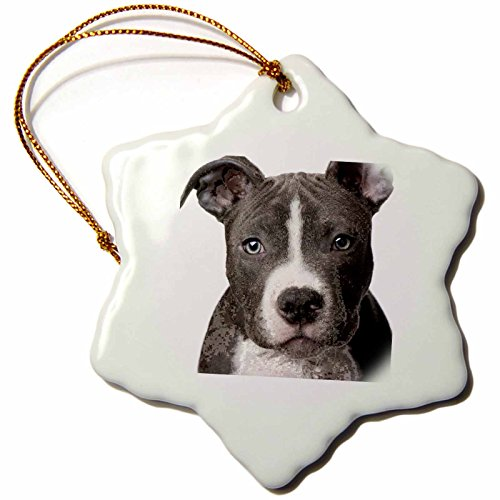 (3dRose American Pit Bull Terrier Puppy Snowflake Porcelain Ornament, 3-Inch)