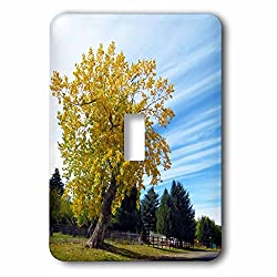 3dRose Jos Fauxtographee- Delightful Fall Tree - A perfect fall day with a tree having yellow leaves and cool clouds - Light Switch Covers - single toggle switch (lsp_273452_1)