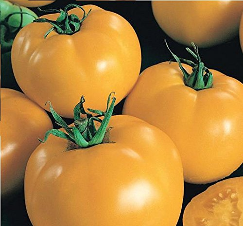 Go Garden 10 - Seeds: Sunny Boy Tomato Seeds - Very Sweet Flavor, Fruits are Globe Shaped and Firm!