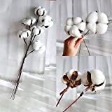 CEWOR 20 Pack Really Natural White Cotton Stems