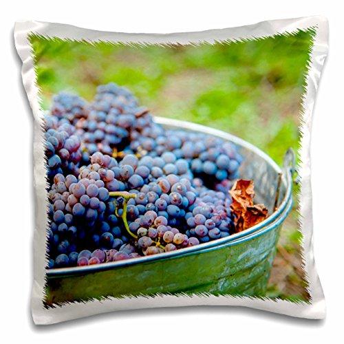Danita Delimont - Grapes - USA, Washington, Klickitat. Cab franc grapes at harvest. - 16x16 inch Pillow Case (pc_208752_1) Francs Pick