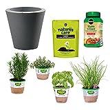 Bonnie Plants Bundle Project Beginner Herb Garden Kit, Caviar Black