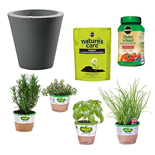 Bonnie Plants Bundle Project Beginner Herb Garden Kit, Caviar Black by Bonnie Plants