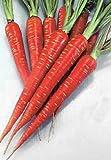 Blood Red Atomic Carrot 300 Seeds -Blood Red Atomic NEW - Veggie