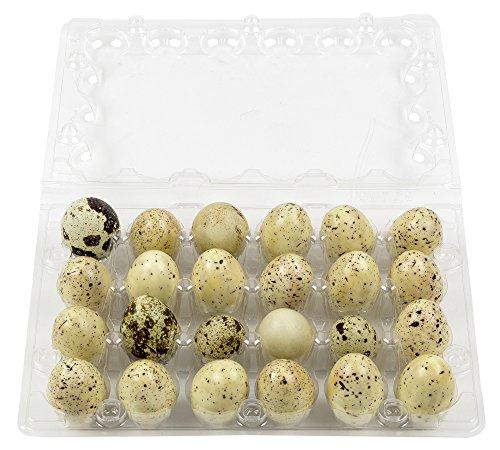 Plastic Quail Egg Carton Holds 24 Eggs Clear Tray Holds Two Dozen Eggs (100)