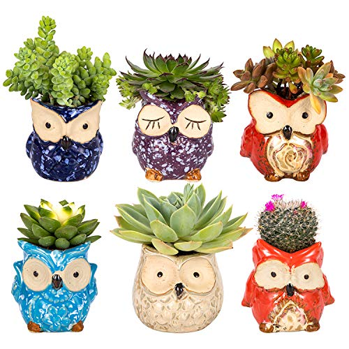 Owl Succulent Pot Ceramic Cute Animal Plant Planters Flowing Glaze Base Serial Set Succulent Plant Pot Cactus Plant Pot Flower Pot Container Planter Bonsai Pots with A Hole Perfect Gift Idea (6pcs)