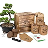 Bonsai Tree Seed Starter Kit - Mini Bonsai Plant Growing Kit, 4 Types of Seeds, Potting Soil, Pots, Pruning Shears Scissor Tool, Plant Markers, Wood Gift Box, eBook, Indoor Garden Gardening Gifts Idea