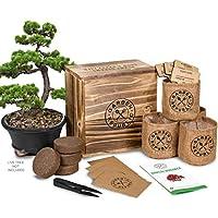 Bonsai Tree Seed Starter Kit - Mini Bonsai Plant Growing...