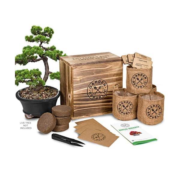 Bonsai Tree Seed Starter Kit Mini Bonsai Plant Growing Kit 4