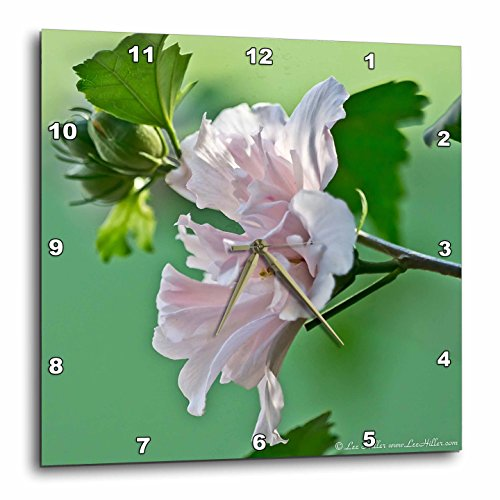 3dRose Lee Hiller Photography Hot Springs National Park Flowers – Pale Pink Peony – 10×10 Wall Clock (dpp_25445_1) For Sale