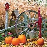 Springbok Pumpkin Harvest 500 Piece Jigsaw Puzzle