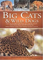 Big Cats And Wild