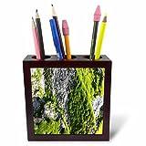 3dRose TDSwhite – Rock Photos - Green Moss Sunshine Rock - 5 inch Tile Pen Holder (ph_281890_1)