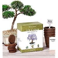 Natures Blossom Bonsai Garden Seed Starter Kit