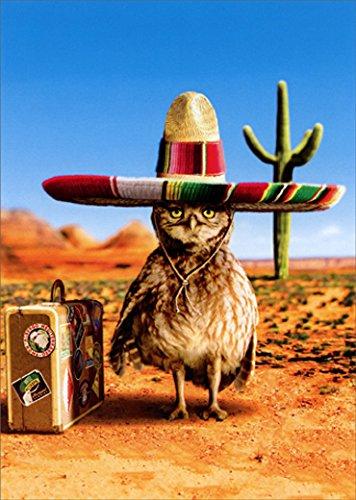 Owl Sombrero Avanti Funny Birthday Card