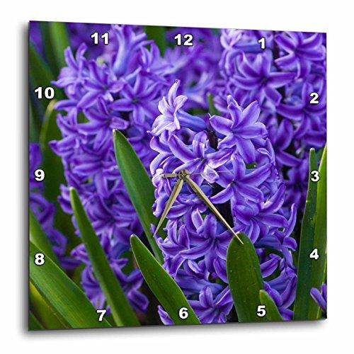 3dRose Danita Delimont - Flowers - Hyacinth in bloom - 13x13 Wall Clock (dpp_258003_2)
