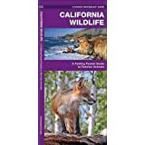 California Wildlife: A Folding Pocket Guide to Familiar Species (A Pocket Naturalist Guide)