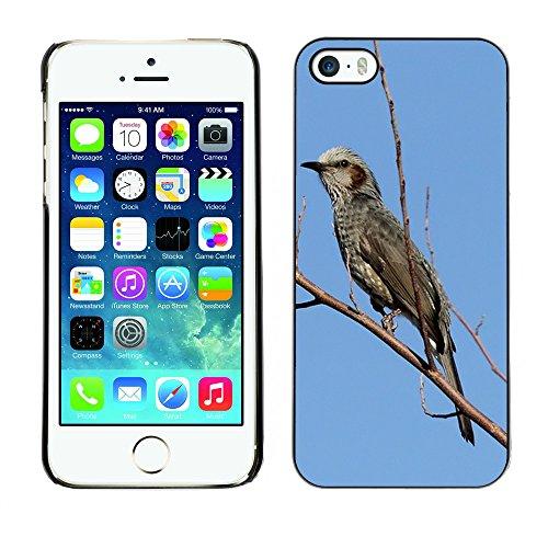 Premio Sottile Slim Cassa Custodia Case Cover Shell // F00004187 oiseau // Apple iPhone 5 5S 5G
