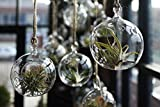 D 4.75″ x H 5.3″ Flat Bottom Globe Glass Hanging votive Candle Holders 6 Glass Terrariums are Great For Decor Ideas for Succulents, Moss Miniature Gardens, Planters, Home Decor DIY Gifts For Sale