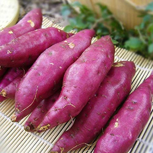 (Onbio 20pcs/50pcs Sweet Potato Seeds Garden Delicious Fresh Fruits Vegetables Seeds Vegetables)